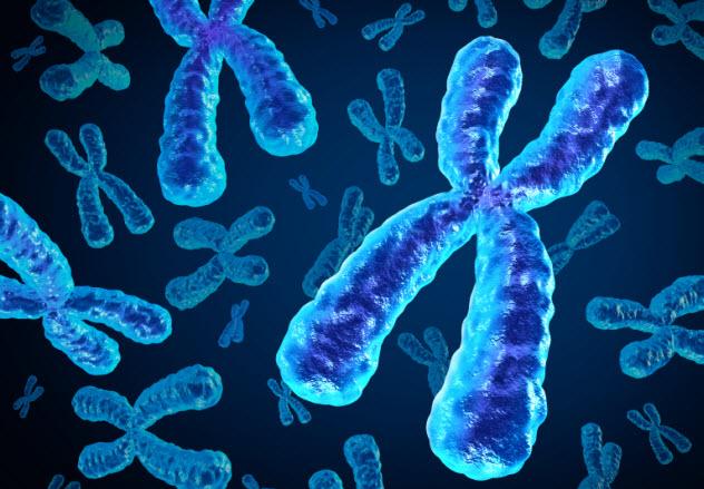 6-x-chromosome_000064654533_Small