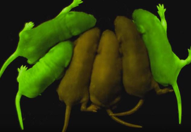 8-glowing-mice