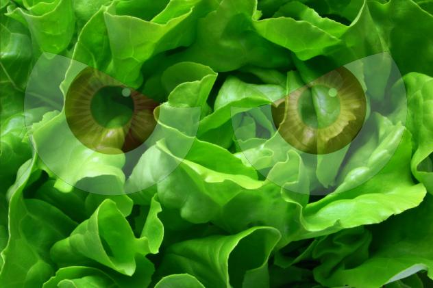 Demonic Lettuce