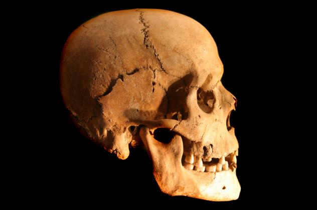 4-skull_000000478962_Small