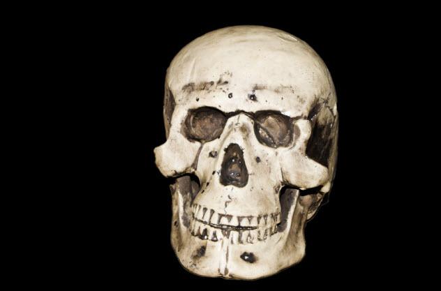 4-skull_000077414645_Small