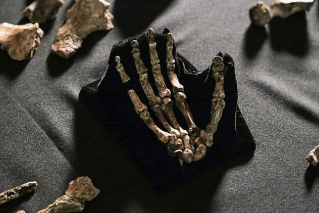Homo_naledi,_hand_(Hawks_version)