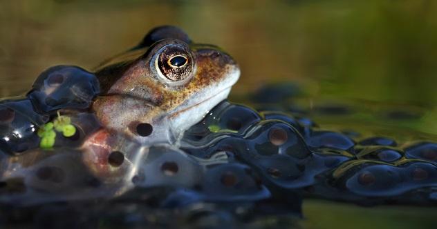 frog salamander