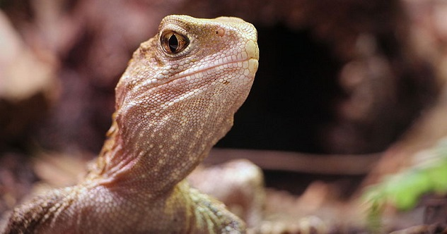 10 Facts About The Most Interesting Reptile In The World