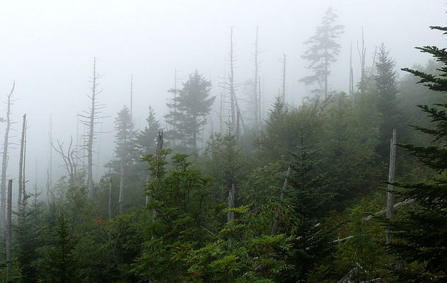 10_1024px-Clingmans_Dome-27527-1