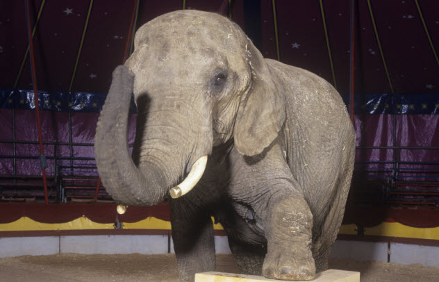 3-elephant-in-circus_000007692799_Small