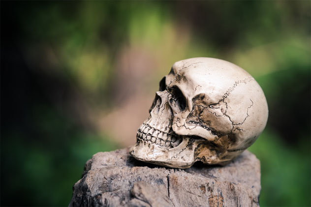 skull human on dried wood
