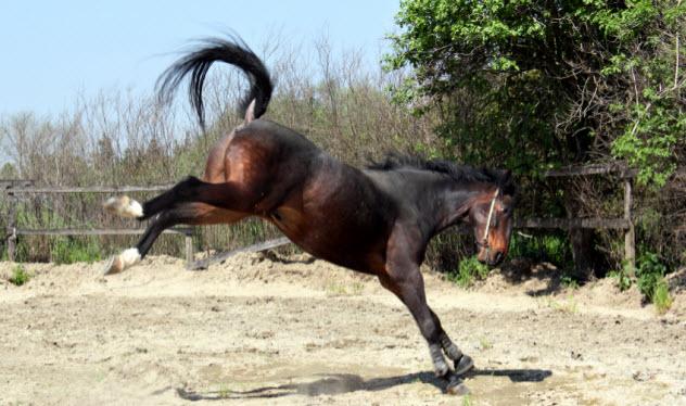 6-kicking-horse_000024173380_Small
