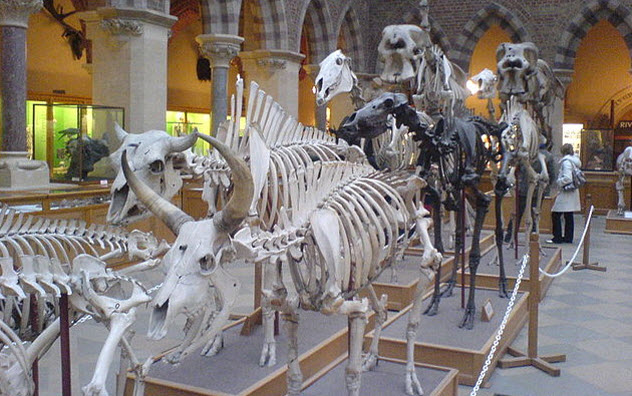 1-mammal-skeletons-oxford-museum-natural-history