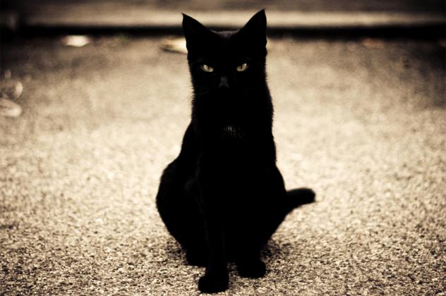 10 blackcat