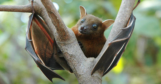 10-fruit-bat