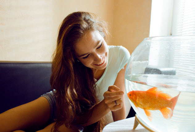 10-goldfish-in-hotel-room_000028058468_Small