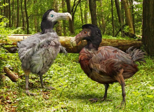 2-dodo-birds_000054095248_Small