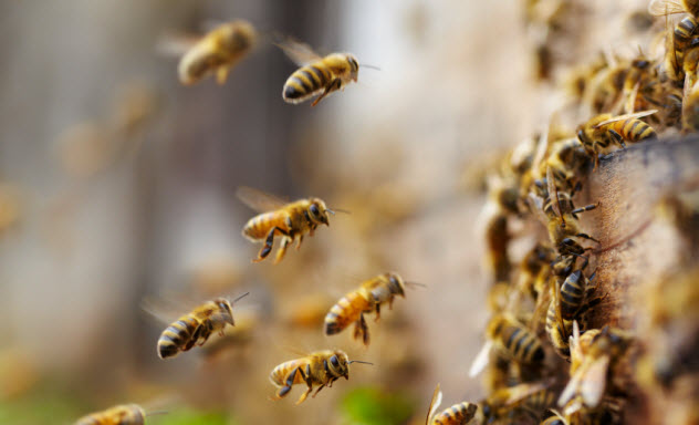 4-honeybees_000023572306_Small