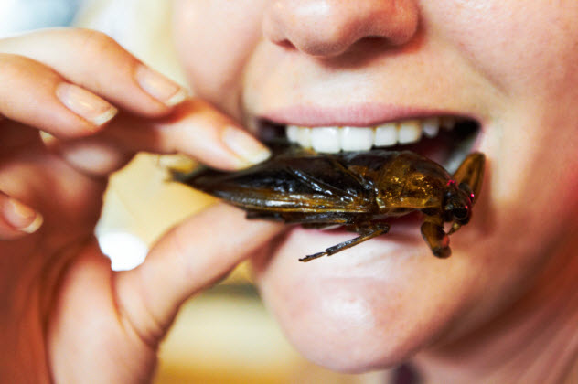 5-eating-insects_000027529594_Small