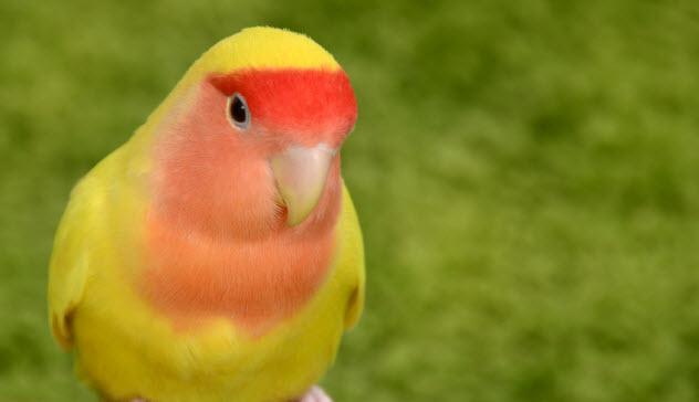 5-lovebird_000067127375_Small