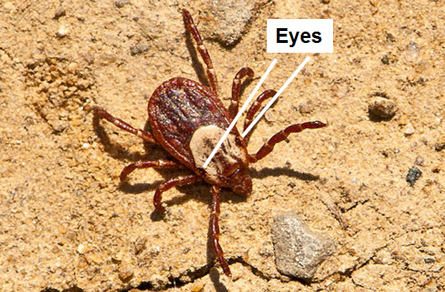6-mite-eyes