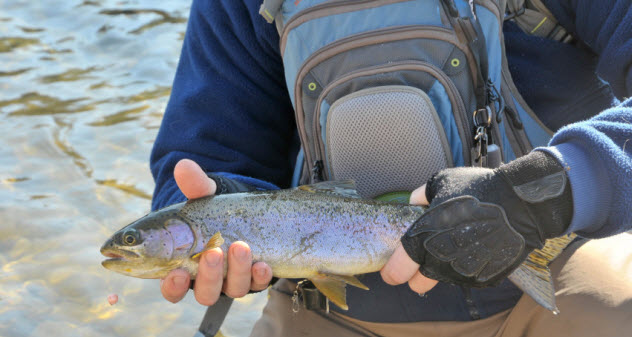 6-trout_000076121769_Small