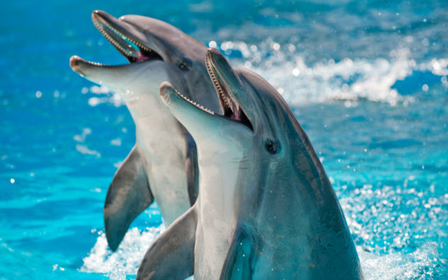 7-dolphins_000009566348_Small