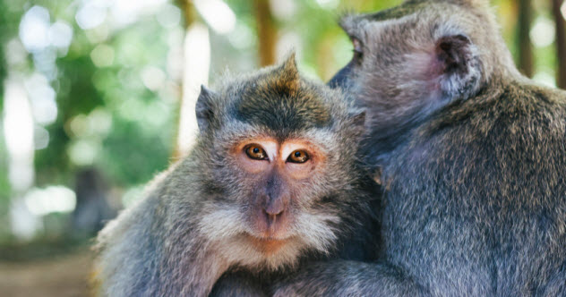 1-macaques_000059188940_Small