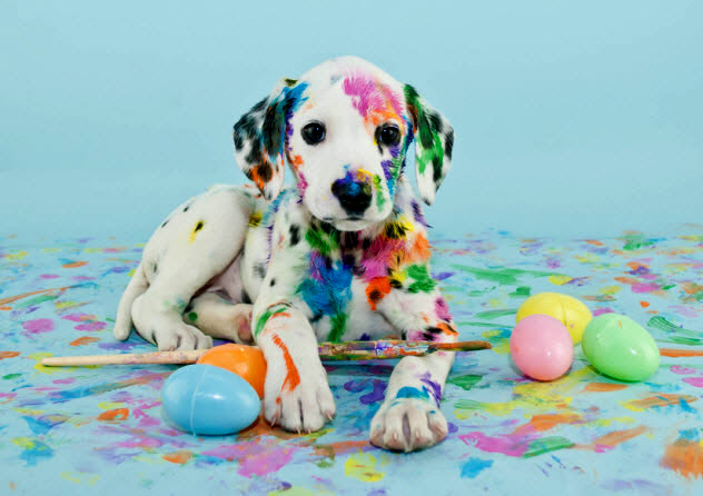10b-easter-dog_36922364_SMALL