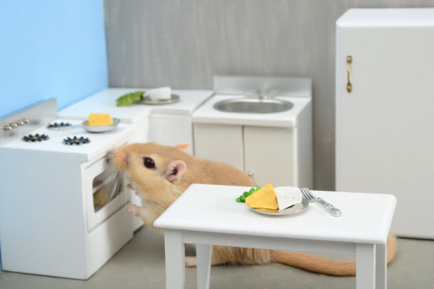 3a-rodent-dollhouse-kitchen_19086970_SMALL