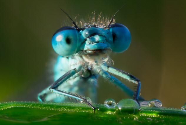 5-dragonfly-eyes_34812790_SMALL