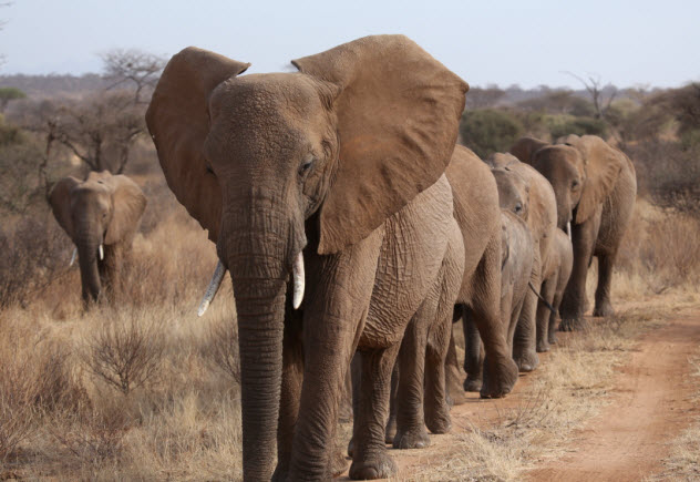 9a-african-elephants_000027279549_Small