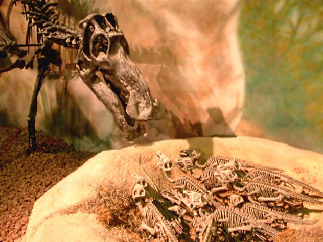Maiasaur Nest
