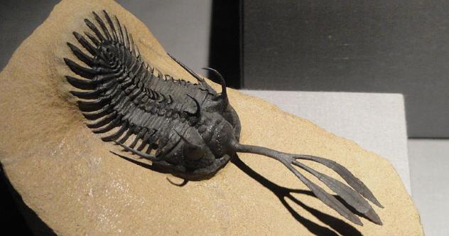 10 Outlandish Prehistoric Arthropods