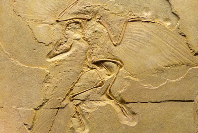 10-Archaeopteryx-lithographica