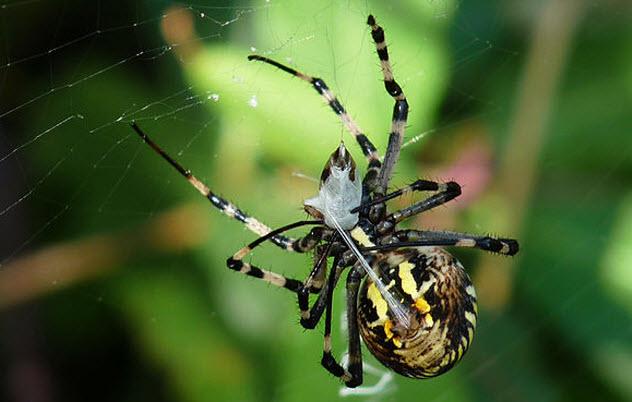 2-spider-spinning-silk