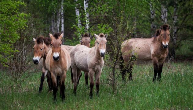 3-animal-sanctuary-chernobyl