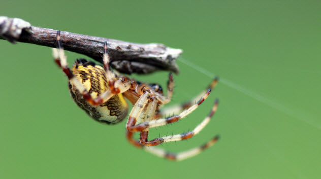 4-crawling-spider_26838983_SMALL