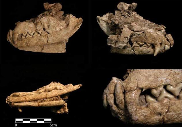 5-ancient-fox-burial