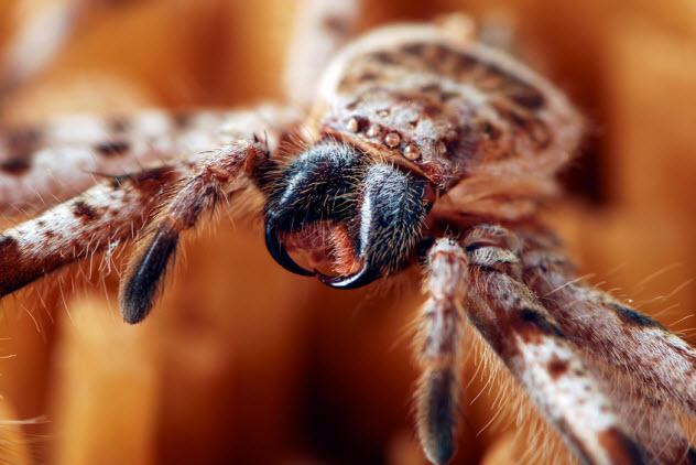 6-spider-venom_5667946_SMALL