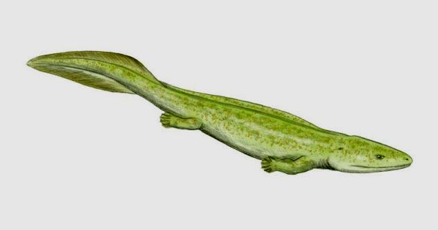 7a-Elginerpeton-pancheni