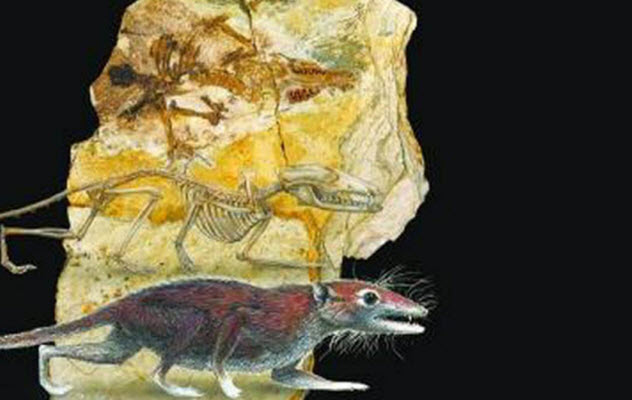 9-Juramaia-sinensis