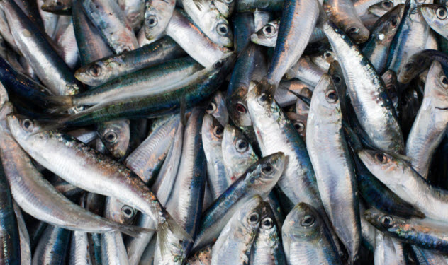 9a-sardines_16606089_SMALL