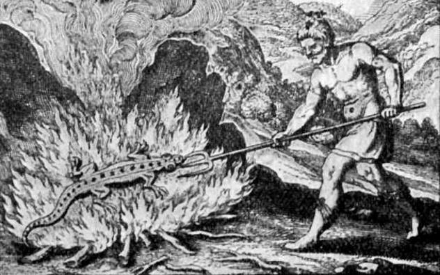 Medieval Salamander