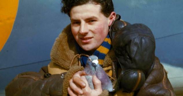Top 10 Heroic Wartime Pigeons