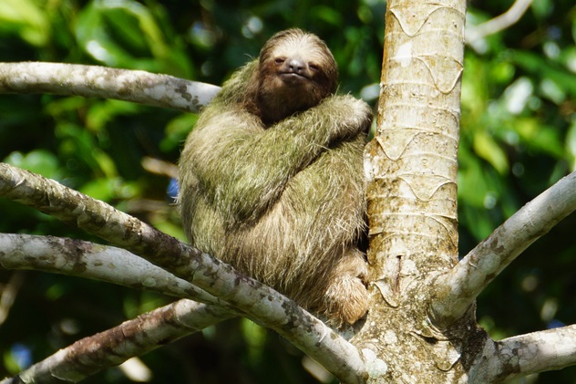 10 Surprising Facts About Sloths Listverse