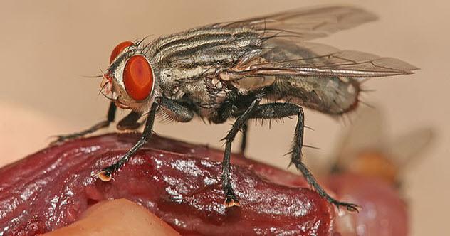 4-forensic-entomology