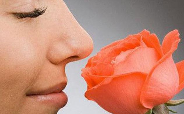 5-human-sense-of-smell