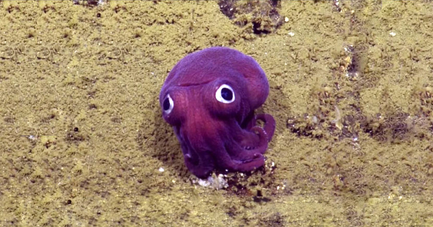Photo of 10 Recent Whimsical Scientific Discoveries