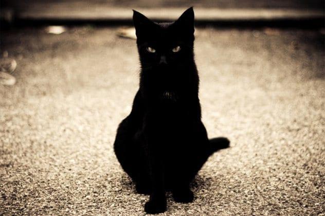 10-blackcat