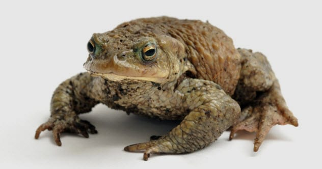 4b-toad_16084677_SMALL