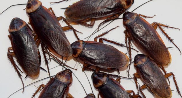 7b-cockroaches_71372981_small