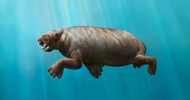 8-ounalashkastylus-tomidai