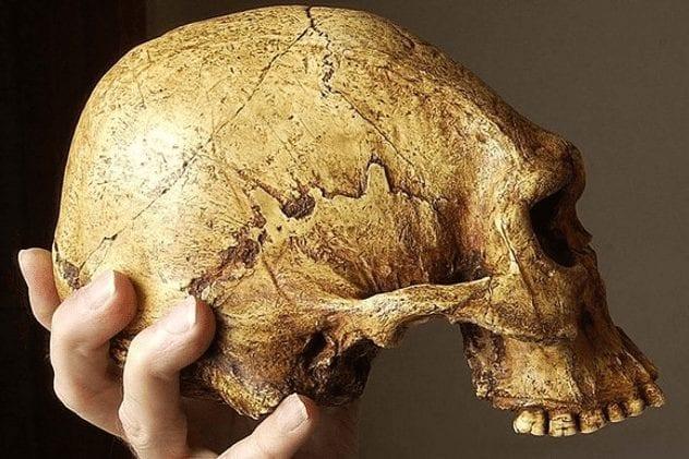 cohuna-skull